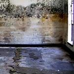 mold-remediation-1