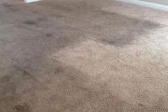 carpet-2-before